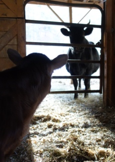 Bo & Thumbelina can see each other through the gate, so they don't get too upset about the separation.